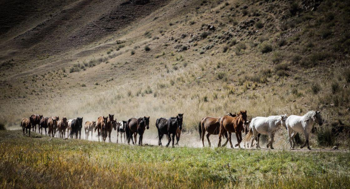 horse_kochkor_helen_lloyd