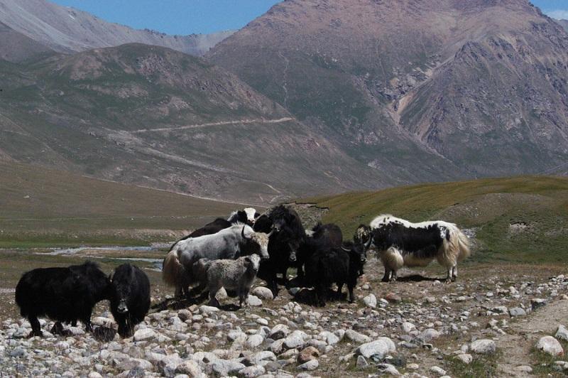 Tosor Ashuu Pass