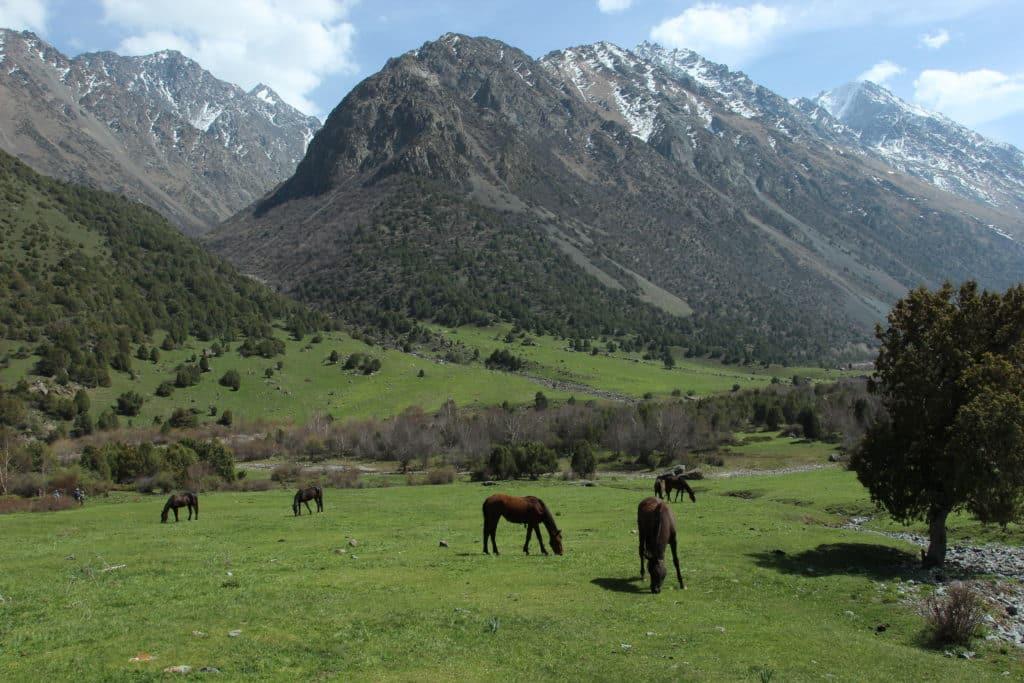 Alamedin-Gorge-trekking-tour